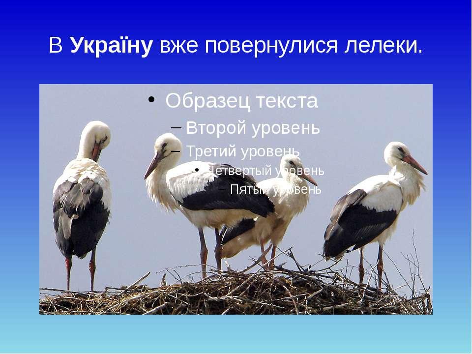 В Україну вже повернулися лелеки.