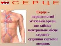 Серце – порожнистий м'язовий орган, що займає центральне місце серцево-судинн...