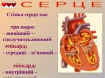 Стінка серця має три шари: зовнішній – сполучнотканинний- епікард; середній –...