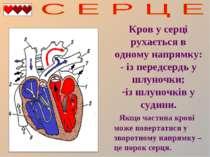 Кров у серці рухається в одному напрямку: - із передсердь у шлуночки; із шлун...