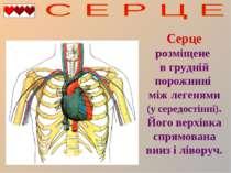 Серце розміщене в грудній порожнині між легенями (у середостінні). Його верхі...