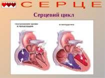Серцевий цикл