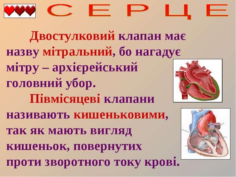 Двостулковий клапан має назву мітральний, бо нагадує мітру – архієрейський го...