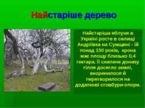 Найстаріше дерево Найстаріша яблуня в Україні росте в селищі Андріївка на Сум...