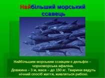 Найбільший морський ссавець Найбільшим морським ссавцем є дельфін – чорноморс...
