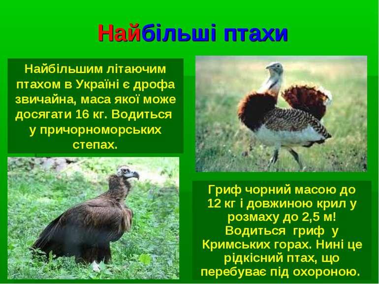 Найбільші птахи Найбільшим літаючим птахом в Україні є дрофа звичайна, маса я...
