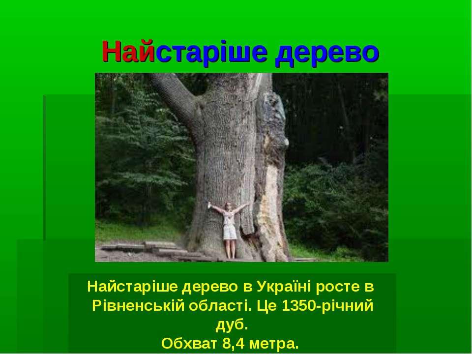 Найстаріше дерево Найстаріше дерево в Україні росте в Рівненській області. Це...