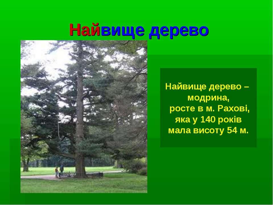 Найвище дерево Найвище дерево – модрина, росте в м. Рахові, яка у 140 років м...
