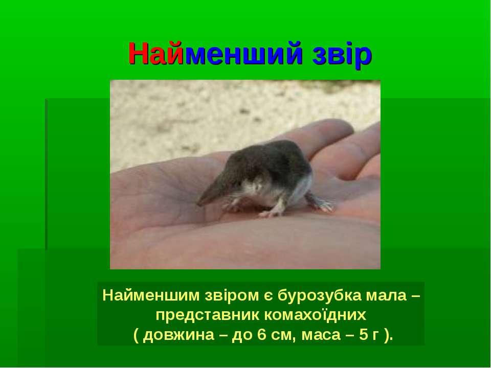 Найменший звір Найменшим звіром є бурозубка мала – представник комахоїдних ( ...