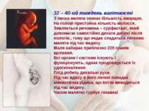 32 – 40-ий тиждень вагітності З личка маляти зникає більшість зморщок. На гол...