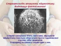 Сперматозоїди атакують яйцеклітину. Видовище фантастичне! Спермії синхронно б...