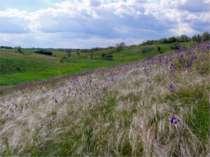 Кущі та дерева, що ростуть в степу України