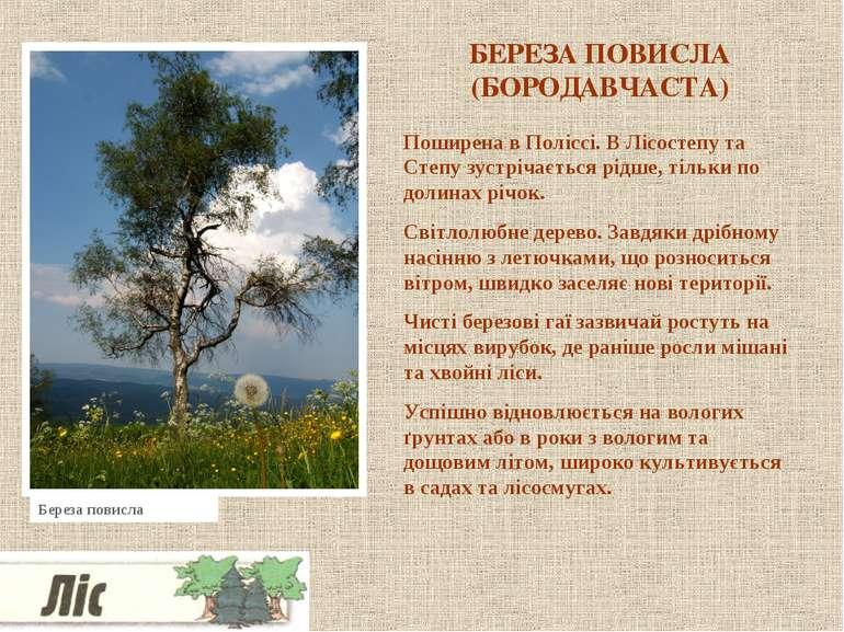 БЕРЕЗА ПОВИСЛА (БОРОДАВЧАСТА) Поширена в Поліссі. В Лісостепу та Степу зустрі...