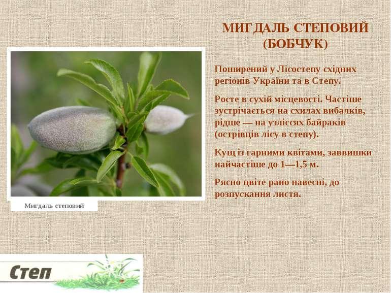 МИГДАЛЬ СТЕПОВИЙ (БОБЧУК) Поширений у Лісостепу східних регіонів України та в...