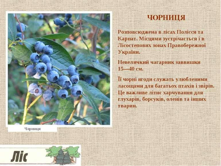 ЧОРНИЦЯ Розповсюджена в лісах Полісся та Карпат. Місцями зустрічається і в Лі...