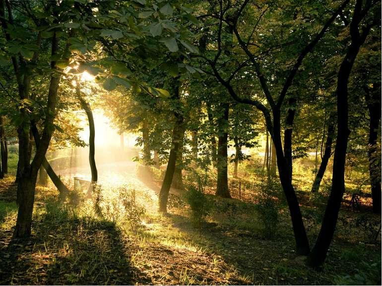 Кущі та дерева, що ростуть по всій території України