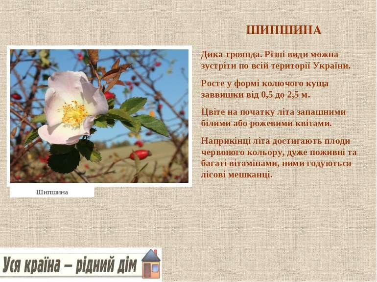 ШИПШИНА Дика троянда. Різні види можна зустріти по всій території України. Ро...