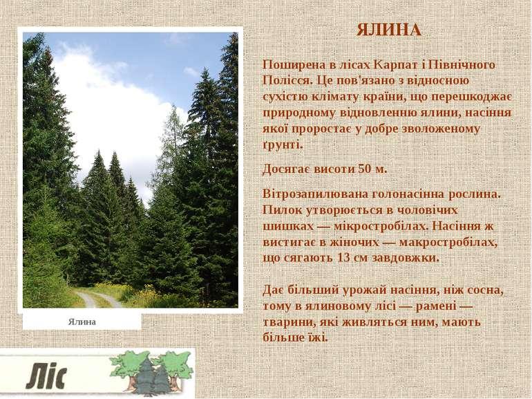 ЯЛИНА Поширена в лісах Карпат і Північного Полісся. Це пов'язано з відносною ...
