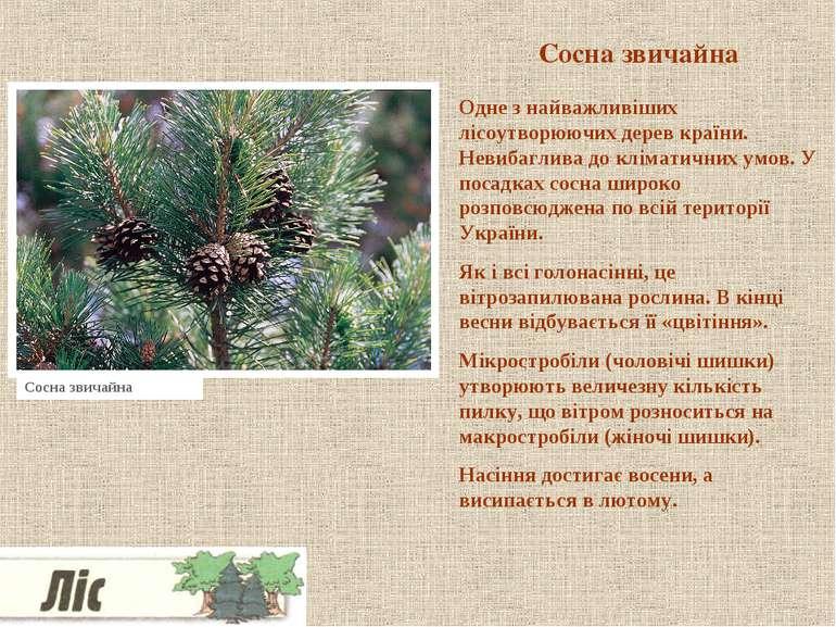 Сосна звичайна Одне з найважливіших лісоутворюючих дерев країни. Невибаглива ...