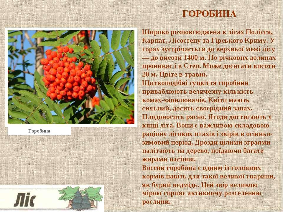 ГОРОБИНА Широко розповсюджена в лісах Полісся, Карпат, Лісостепу та Гірського...