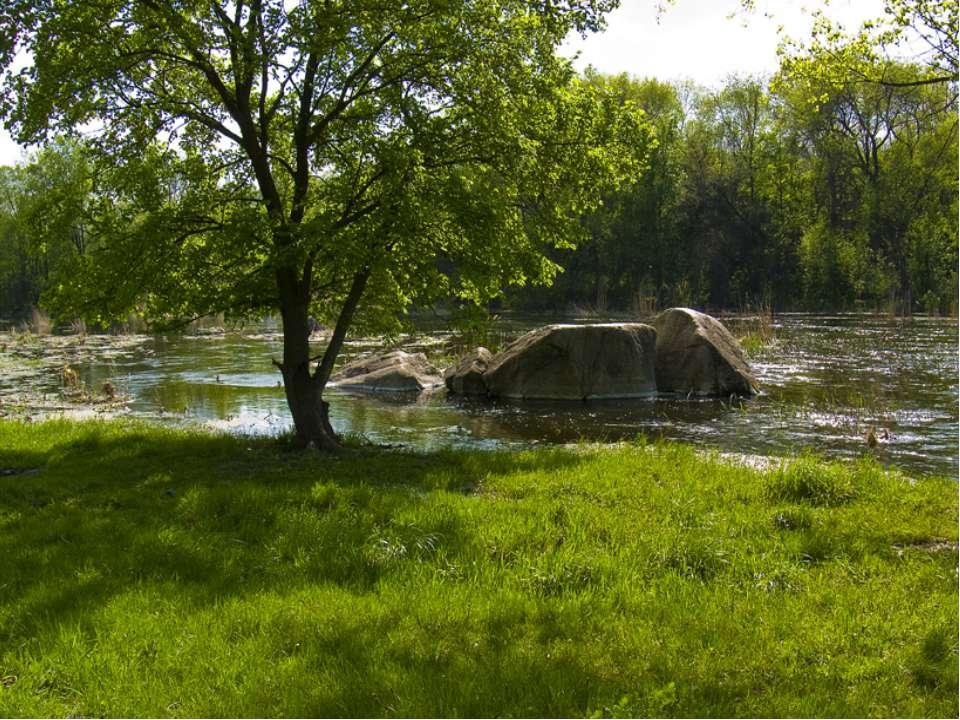 Кущі та дерева, що ростуть біля внутрішніх водойм України