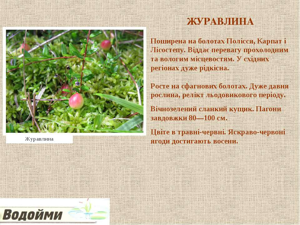 ЖУРАВЛИНА Поширена на болотах Полісся, Карпат і Лісостепу. Віддає перевагу пр...
