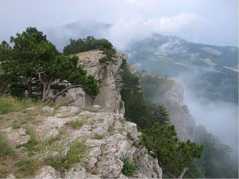 Кущі та дерева, що ростуть в Криму
