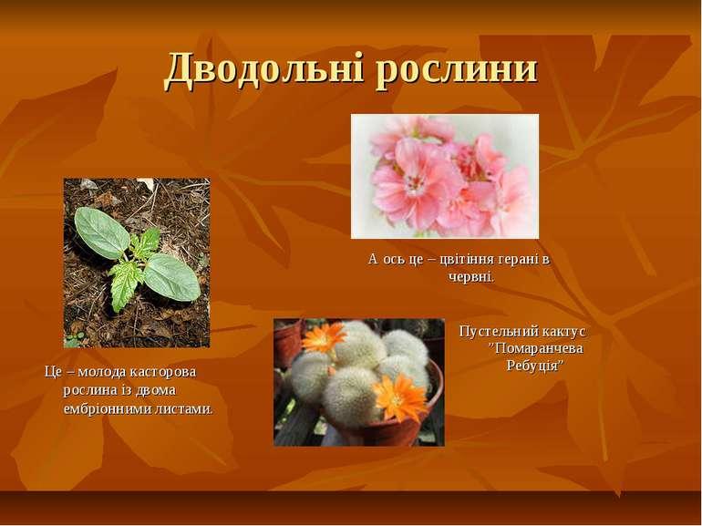 Дводольні рослини Це – молода касторова рослина із двома ембріонними листами....
