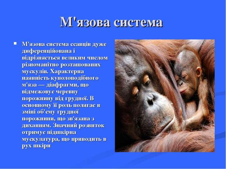 М'язова система М'язова система ссавців дуже диференційована і відрізняється ...