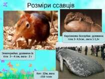 Розміри ссавців Землерийка: довжина їх тіла 3—4 см, вага- 2 г Кит: 22м, вага ...