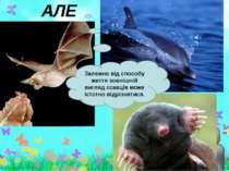 АЛЕ Залежно від способу життя зовнішній вигляд ссавців може істотно відрізнят...
