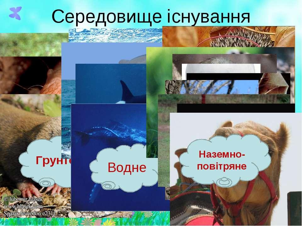 Середовище існування Грунтове Водне Наземно-повітряне