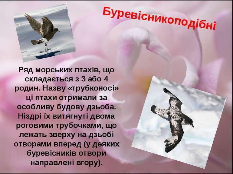 Ряд морських птахів, що складається з 3 або 4 родин. Назву «трубконосі» ці пт...