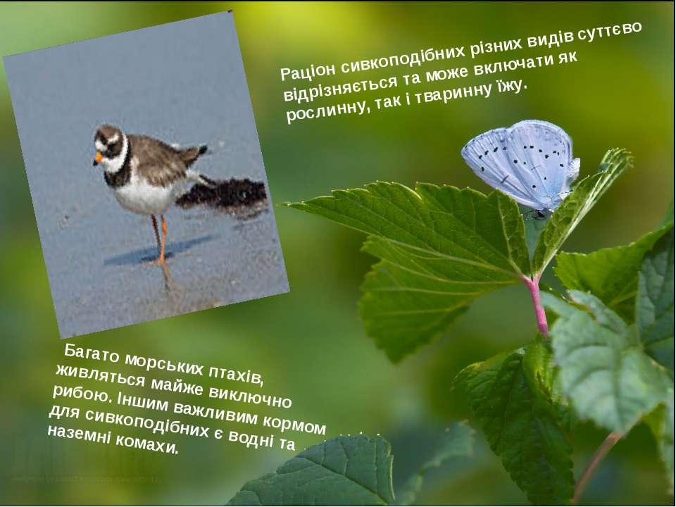 Раціон сивкоподібних різних видів суттєво відрізняється та може включати як р...