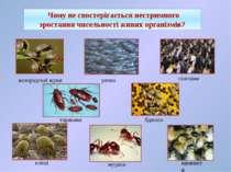 Чому не спостерігається нестримного зростання чисельності живих організмів? р...
