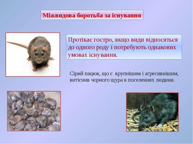 Міжвидова боротьба за існування Протікає гостро, якщо види відносяться до одн...
