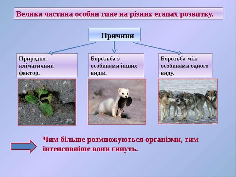 Велика частина особин гине на різних етапах розвитку. Причини Природно-клімат...