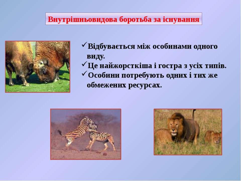 Внутрішньовидова боротьба за існування Відбувається між особинами одного виду...