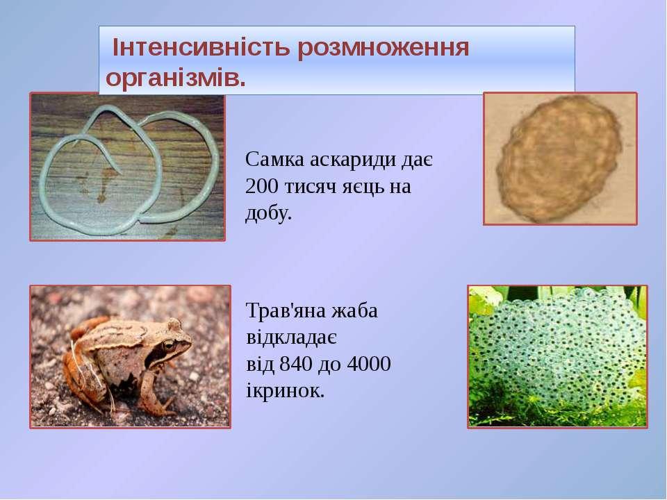 Самка аскариди дає 200 тисяч яєць на добу. Інтенсивність розмноження організм...