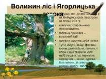 Волижин ліс і Ягорлицька затока Волижін ліс –розташований в на Кінбурнському ...