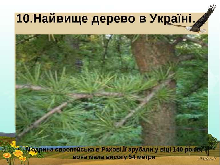10.Найвище дерево в Україні… Модрина європейська в Рахові.Її зрубали у віці 1...