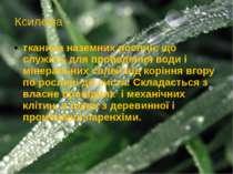 Ксилема - тканина наземних рослин, що служить для проведення води і мінеральн...