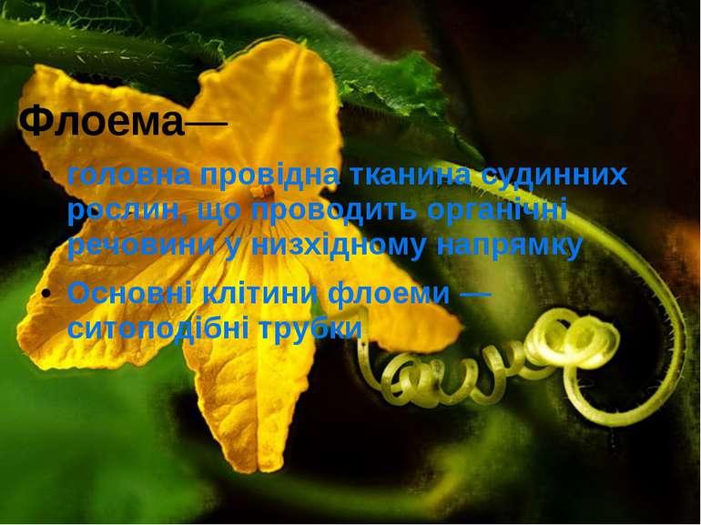 Флоема— головна провідна тканина судинних рослин, що проводить органічні речо...