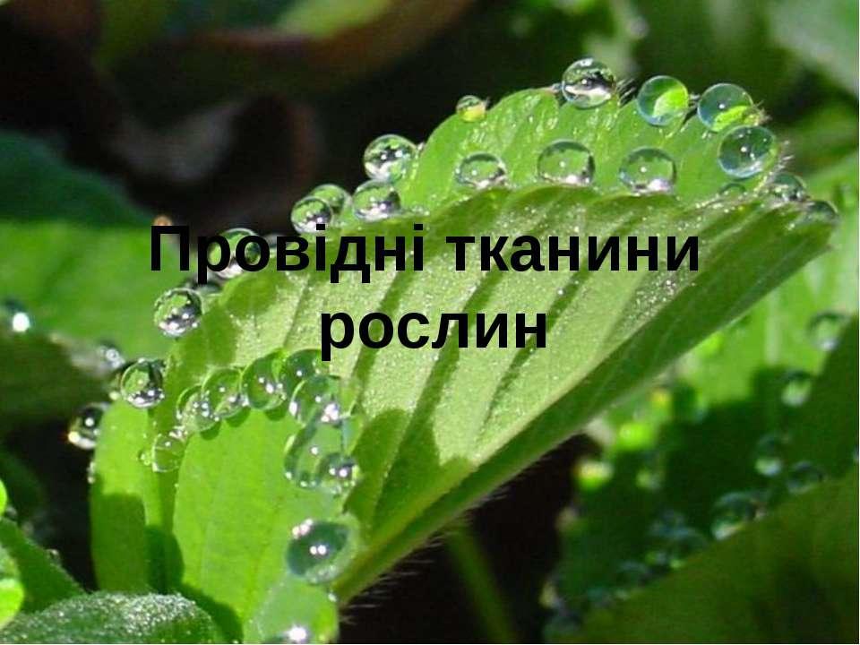 Провідні тканини рослин