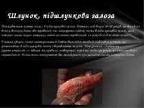 Пошкодження мають місце і в підшлунковій залозі. Розтини осіб віком 30-40 рок...