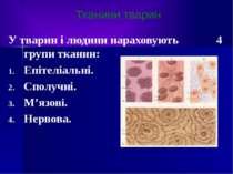 У тварин і людини нараховують 4 групи тканин: Епітеліальні. Сполучні. М'язові...