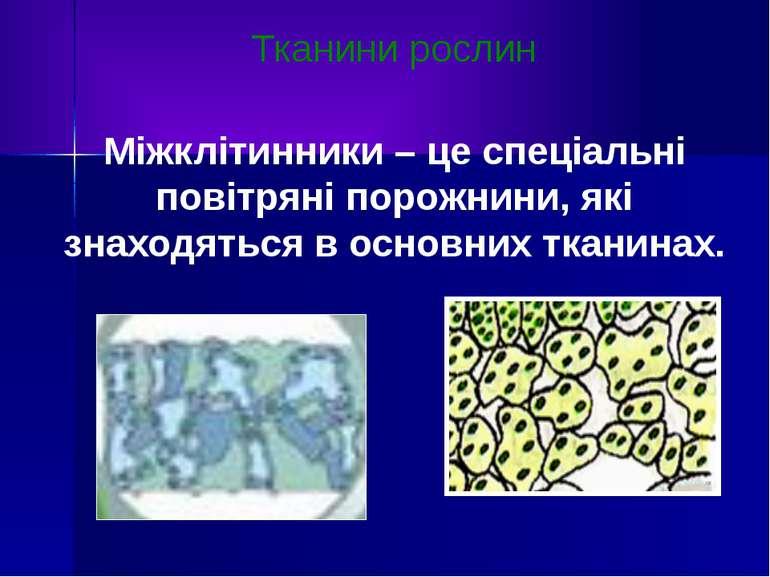 Тканини рослин Міжклітинники – це спеціальні повітряні порожнини, які знаходя...