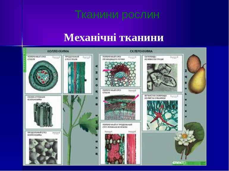 Тканини рослин Механічні тканини