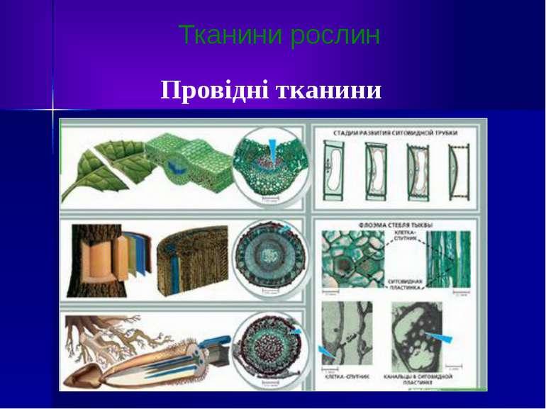Тканини рослин Провідні тканини