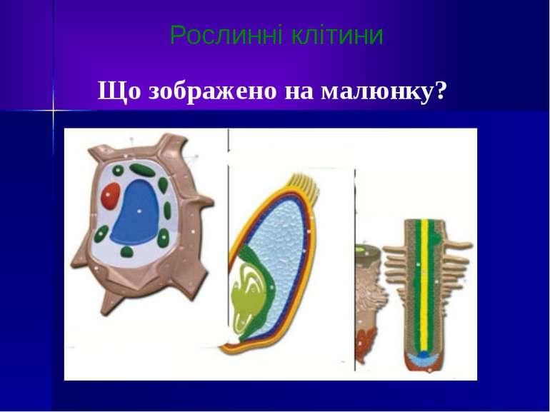 Рослинні клітини Що зображено на малюнку?